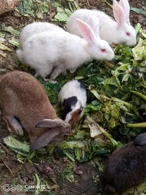 Rabbits And Guinea Pigs   Livestock & Poultry for sale in Mombasa, Nyali