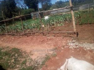 Farm Land With Land Produce on Sale.   Land & Plots For Sale for sale in Limuru, Bibirioni
