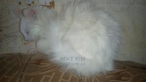 1-3 Month Female Mixed Breed Persian   Cats & Kittens for sale in Kiambu, Ndenderu