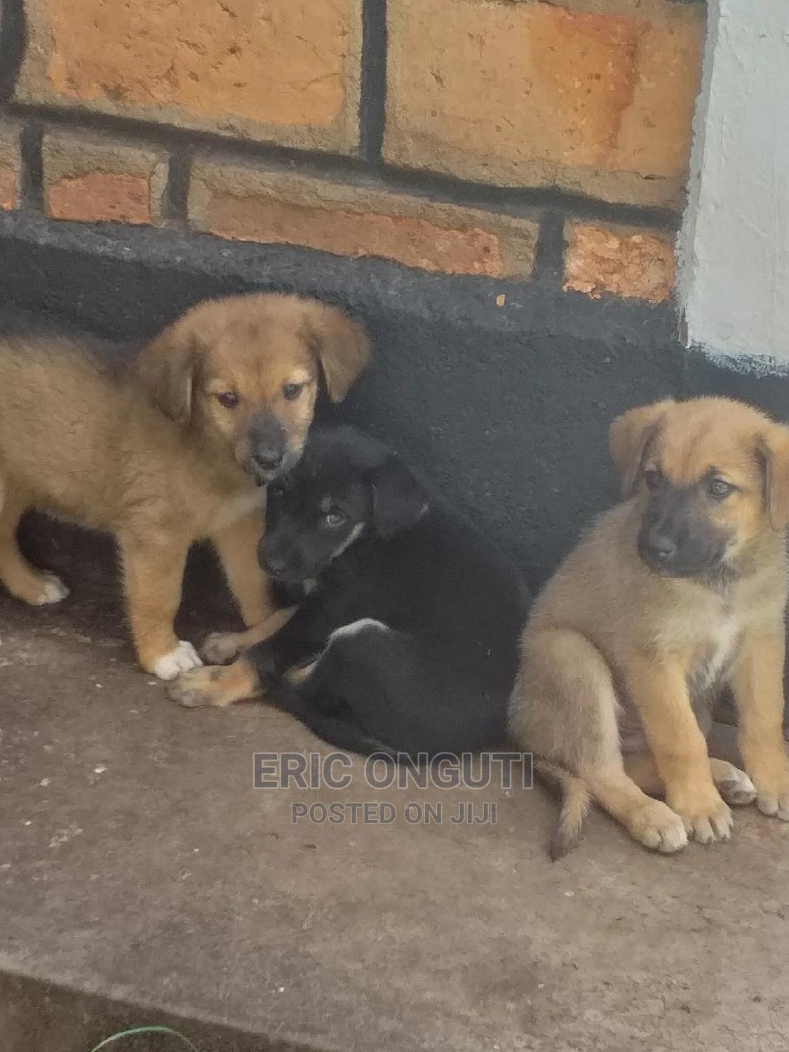 Archive: 1-3 Month Female Mixed Breed Dog