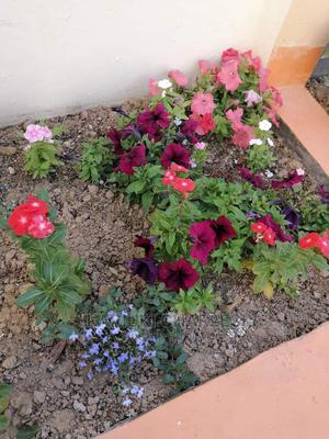 Landscaping | Gardening & Landscaping CVs for sale in Embu, Kirimari