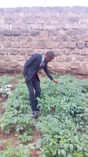 Agriculture Engineer | Engineering & Architecture CVs for sale in Nairobi, Dandora