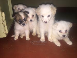 1-3 Month Female Purebred Maltese | Dogs & Puppies for sale in Kiambu, Kiambaa