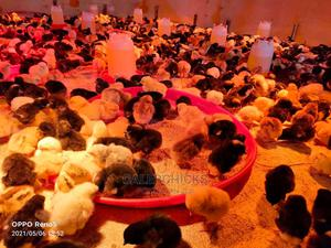 One Day Old Chicks | Livestock & Poultry for sale in Uasin Gishu, Turbo