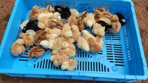 One Day Kenbro Improved Kienyeji Chicks | Livestock & Poultry for sale in Nairobi, Nairobi Central