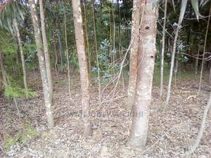 Forested Plot on Quick Sale   Land & Plots For Sale for sale in Nyandarua, Weru
