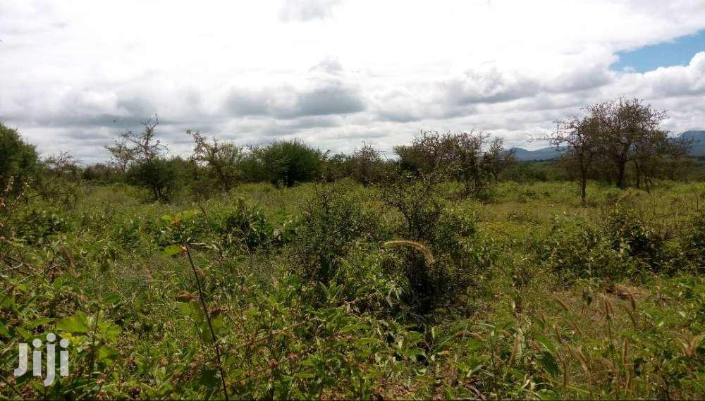 Archive: Leasing 100 Acres Ngatataek Ideal For Farming, Cows And Goats Rearing