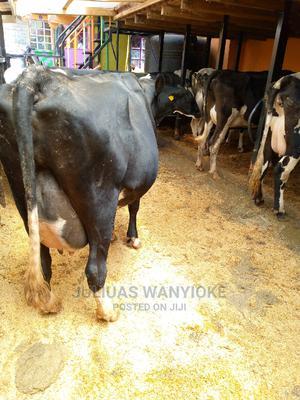 Milking Cow for Sale   Livestock & Poultry for sale in Kiambu, Githunguri