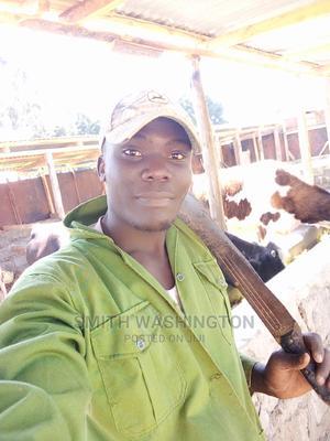 Shamba Boy   Farming & Veterinary CVs for sale in Nairobi, Nairobi West