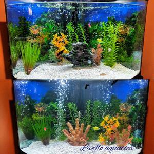 Mini Aquarium | Fish for sale in Nairobi, Embakasi