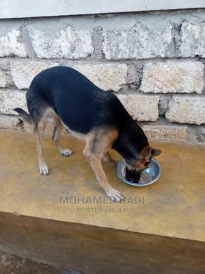 6-12 Month Female Purebred German Shepherd | Dogs & Puppies for sale in Mombasa, Shanzu