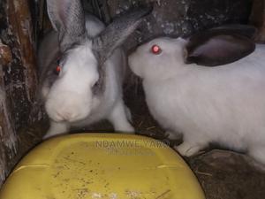 Rabbits For Sale   Livestock & Poultry for sale in Nakuru, Lanet
