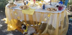 1+ year Female Mixed Breed Maltese | Dogs & Puppies for sale in Nairobi, Utawala
