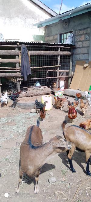 Kienyeji Chicken | Livestock & Poultry for sale in Kiambu, Ruiru