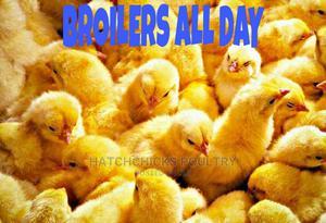 Day Old Broiler Chicks | Livestock & Poultry for sale in Kiambu, Kiambu / Kiambu