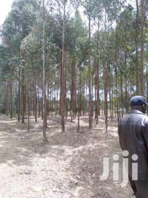 5acre Tourching Tarmac On Sale At Ndunyu Njeru   Land & Plots For Sale for sale in Nyandarua, North Kinangop