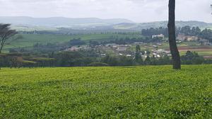 Tea Estate for Sale in Nandi Hills   Land & Plots For Sale for sale in Nandi, Nandi Hills