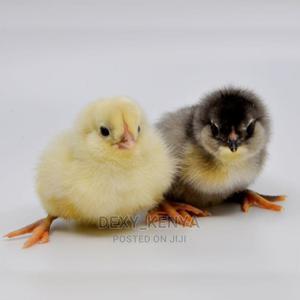 One Day Old Chicks | Livestock & Poultry for sale in Nairobi, Nairobi Central