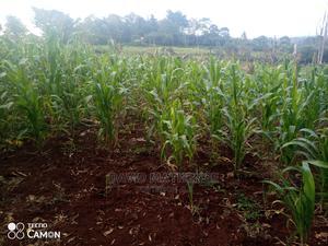 Nyeri Nairutia 10 Acres   Land & Plots For Sale for sale in Nyeri Town, Kamakwa