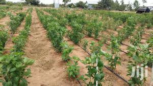 Drip Irrigation Kit Dripline For Chili | Farm Machinery & Equipment for sale in Kilifi, Malindi