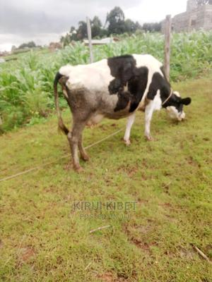 Fresian Cow For Sale   Livestock & Poultry for sale in Kisii, Bomachoge Borabu