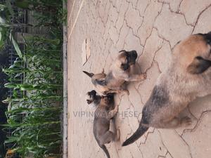 1-3 Month Male Mixed Breed Dog   Dogs & Puppies for sale in Nairobi, Karen