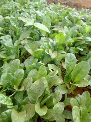 Spinach Seedlings Fodhork Giant at 2 Bob Each | Feeds, Supplements & Seeds for sale in Embu, Kithimu