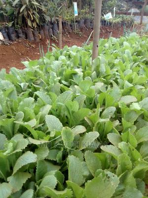 Chinese Cabbage Seedlings at Ksh 2 Each | Feeds, Supplements & Seeds for sale in Embu, Kithimu