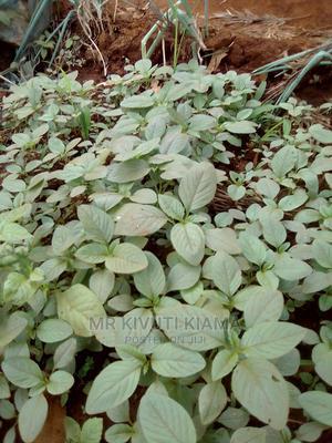 Terere Seedlings Aka McHicha at Ksh 2 Each | Feeds, Supplements & Seeds for sale in Embu, Kithimu
