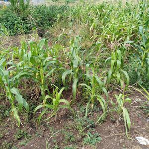 Kirinyaga County Plots   Land & Plots For Sale for sale in Kirinyaga, Mutithi