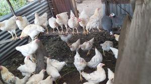 Improved Kienyeji | Livestock & Poultry for sale in Nakuru, Nakuru Town West