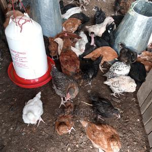 Improved Kienyeji | Livestock & Poultry for sale in Nakuru, Nakuru Town East