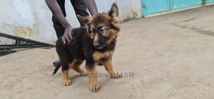 1-3 Month Female Purebred German Shepherd | Dogs & Puppies for sale in Kiambu, Ruiru