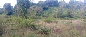 Virgin Land Selling at 1M Per Acre | Land & Plots For Sale for sale in Murang'a, Muruka
