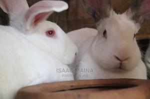 Organic Rabbits.   Livestock & Poultry for sale in Kiambu, Ruiru