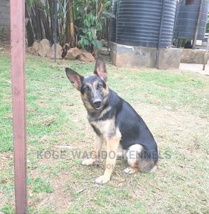6-12 Month Female Purebred German Shepherd | Dogs & Puppies for sale in Nairobi, Thome