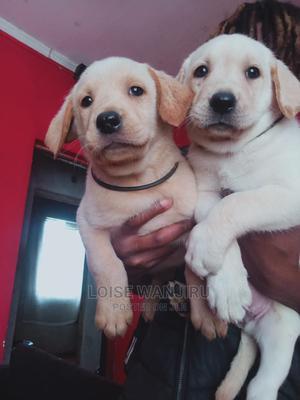 1-3 Month Female Purebred Labrador Retriever | Dogs & Puppies for sale in Kiambu, Kiambu / Kiambu
