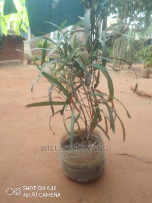 Seedlings for Planting | Feeds, Supplements & Seeds for sale in Taita Taveta, Kaloleni
