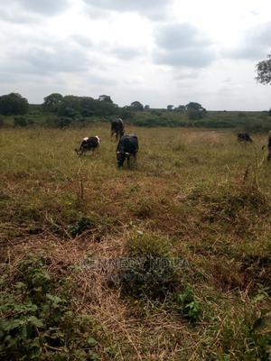 Land for Lease   Land & Plots for Rent for sale in Kiambu / Kiambu , Kiuu
