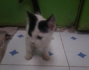 1-3 Month Female Mixed Breed Cat | Cats & Kittens for sale in Nairobi, Nairobi Central