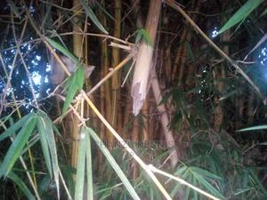 Bamboo Poles | Garden for sale in Vihiga, Chavakali