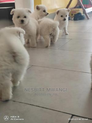1-3 Month Female Purebred Japanese Spitz | Dogs & Puppies for sale in Nairobi, Karen