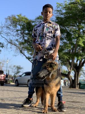6-12 month Male Purebred German Shepherd | Dogs & Puppies for sale in Mombasa, Mvita