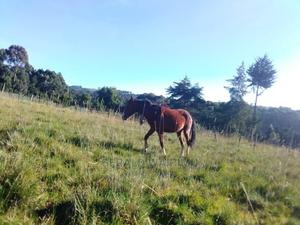 Horse on Offer | Other Animals for sale in Nyandarua, Karau
