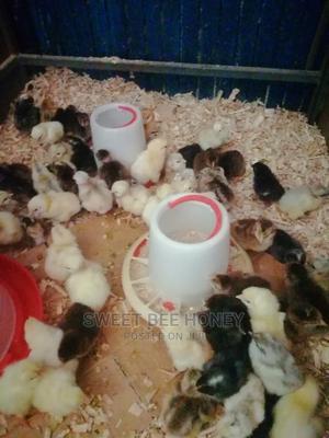 Day Old Kienyeji Chicks | Livestock & Poultry for sale in Nairobi, Komarock