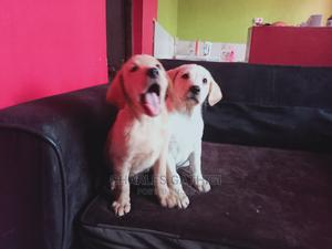 0-1 Month Male Purebred Labrador Retriever | Dogs & Puppies for sale in Nairobi, Nairobi Central