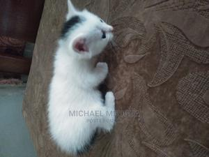 1-3 Month Female Mixed Breed Cat | Cats & Kittens for sale in Nairobi, Thome