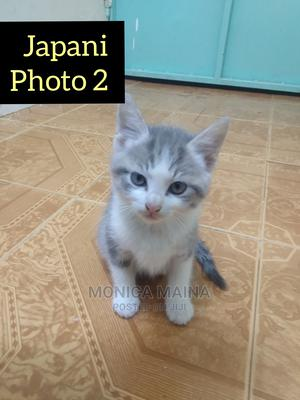1-3 Month Female Mixed Breed Cat   Cats & Kittens for sale in Nairobi, Kasarani