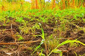 Samara Gardens at Sagana 50×100   Land & Plots For Sale for sale in Kirinyaga, Kiine