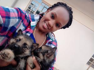 1-3 Month Female Purebred German Shepherd | Dogs & Puppies for sale in Machakos, Machakos Town